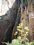 Rockscape in gorge in El Chorro Stock Photos
