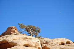 rocktree Royaltyfri Bild