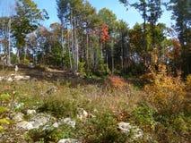 Rocky Autumn Forest met lange bomen stock afbeelding
