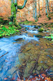 Rocky Autumn Stream Royalty Free Stock Images