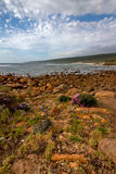 Rocky bay with wild flowers in foreground Royalty Free Stock Images