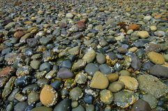 Rocky beach. Rocks and sealife on the beach royalty free stock image