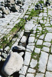 Rocky Beach 6. Detail of limestone pavement beach feature Royalty Free Stock Photography