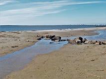 Rocky Beach auf Sullivan-` s Insel lizenzfreies stockfoto