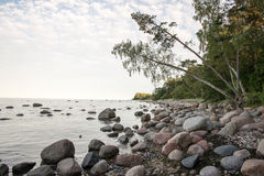 Rocky beach in the baltic sea Royalty Free Stock Image