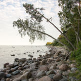 Rocky beach in the baltic sea Stock Photography