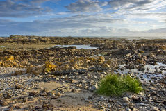 Rocky beach with clouds Royalty Free Stock Photography