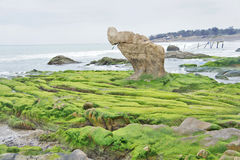 Rocky beach covered by seaweed Stock Images