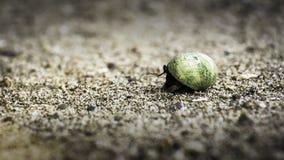 Rocky Beach Crab Arkivfoton