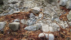 Rocky beach in Dorset near Durdle Door Royalty Free Stock Images