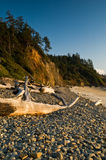 Rocky beach and driftwood logs. Tree lined cliffs and a rocky beach with driftwood logs Royalty Free Stock Image
