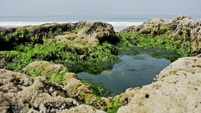 Rocky Beach Flora FHD almacen de metraje de vídeo