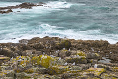 Rocky beach in the Galician littoral Royalty Free Stock Photo