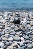 Rocky beach. Pebble-like egg. Stock Image