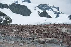 Rocky beach with penguins in Antarctica Royalty Free Stock Image