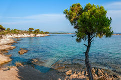 Rocky beach with pines Stock Photo
