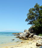 Rocky beach and a tree. Photo of a beach in Greece stock photos