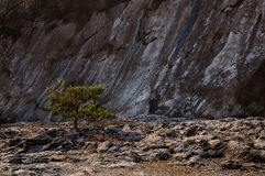 Rocky beach tree Royalty Free Stock Image