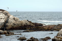 Rocky beach in Vina del Mar. Stock Images