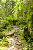 Rocky Black Forest Path Royalty Free Stock Image