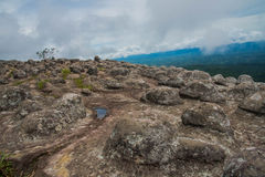 Rocky button bedrock occurs naturally in Phu hin rong kra  natio Royalty Free Stock Images