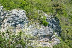 Rocky cliff in dense green forest. Spring colors in the mountain forest. Natural background. Spring season stock image