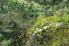 Rocky cliff in dense green forest. Spring colors in the mountain forest stock photo