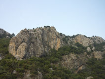 Rocky cliff, mountain trees and blue sky Stock Images