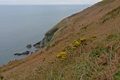 Cliffs with shrubs along the north sea coast of howth , ireland. Rocky cliffs along the north sea coast of howth, ireland with flowering gorse  bushes on a royalty free stock image
