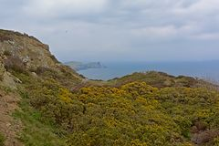 Cliffs with vegetation along the north sea coast of howth , ireland. Rocky cliffs along the north sea coast of howth, ireland with flowering gorse  bushes on a royalty free stock photo