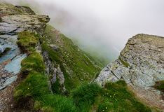 Rocky cliffs in foggy weather. Wild flowers among the grassy slopes. dramatic view from the hill Stock Photos