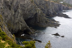 Rocky cliffs with seagull Stock Photography