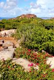 Rocky coast in the Caribbean Stock Images
