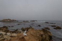 Rocky Coast em um dia nevoento foto de stock