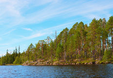 Rocky coast of lake with  pines Royalty Free Stock Photos
