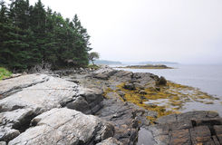 Rocky coast of Maine Royalty Free Stock Image