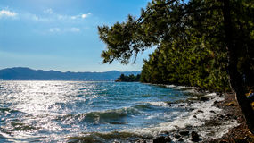 Rocky coast near a forest. Photo Royalty Free Stock Image