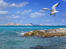 Rocky coast, seagull over the sea and city in the distance Stock Photography