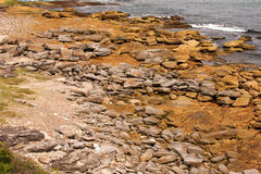 Rocky Coast, Sydney Royalty Free Stock Photography