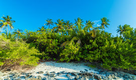 Rocky coast of a tropical island, Maldives Stock Image