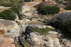 Rocky coastal dunes   at Cape Clairault south   west Australia in late winter. Stock Image