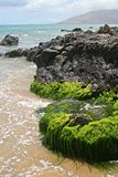 Rocky Coastline. In Maui, Hawaii Stock Image