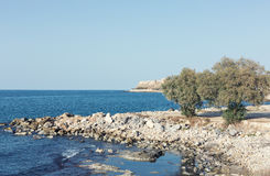 Rocky coastline of a blue sea with olive trees and ancient fortress of Rethymno Stock Image