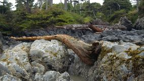Rocky coastline in British Columbia Royalty Free Stock Images