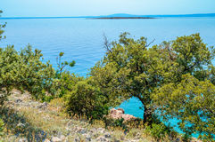 Rocky coastline with bushes and olive trees by the Adriatic sea Royalty Free Stock Photo