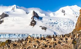 Rocky coastline with flock of gentoo pengins and glacier with ic. Ebergs in the background at Half Moon island, Antarctic peninsula