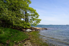Rocky coastline lined with green trees stock images