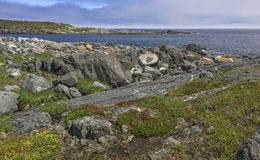 Rocky coastline of Newfoundland near Tilting Royalty Free Stock Photo