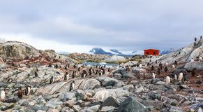 Rocky coastline overcrowded with flock of gentoo penguins and fj. Ord with polar hut in the background, Peterman island, Antarctic peninsula