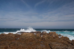 Rocky coastline of South Africa Stock Images